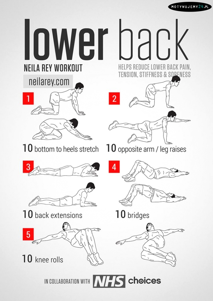 Back Strengthening Exercises Chart For Lower PicturesExercises For Lower Back Muscles